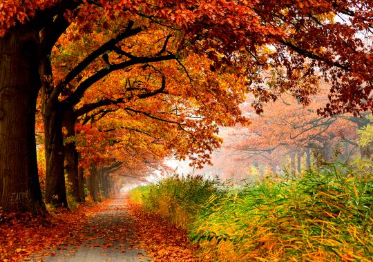 chemin, automne